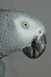Grey on grey Stock Image