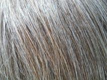 Grey Hair Macro natural iluminado por el sol Fotos de archivo
