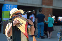 Grey haired male musician plays at Latino Heritage Festival Royalty Free Stock Photos