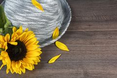 Grey hat and one sunflower with petals Stock Photography