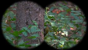 Grey-headed woodpecker picus canus seen through binoculars. Bird watching at wildlife safari. Shot with a Sony RX10 IV fps 59,94 FHD stock footage