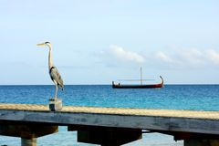 Grey heron and the boat Royalty Free Stock Image