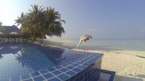 Grey Heron drinking pool water at island resort stock video