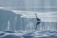 Grey heron frozen lake at winter. Winter lake scene. Wildlife stock image