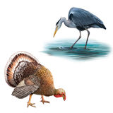 Grey Heron que se coloca en la caza del agua con la cabeza Imágenes de archivo libres de regalías