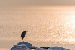 Heron waiting for springtime Stock Photography