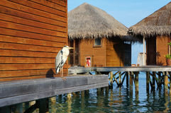 Grey heron standing on wooden deck of a bungalow in the Maldives at sunset. Huts rise above water on piles. Peaceful scenery of se royalty free stock images