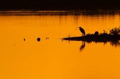 A Grey Heron at sunset Stock Photo