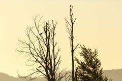 Grey Herons in een boom stock foto's