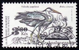 Grey herons with the inscription `Ardea cinerea`, series animals, circa 1983 Royalty Free Stock Photos