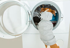 Grey hoodie sweater dog back near washing machine. Laundry and dry cleaning pet service. employee accepts the order, puts dirty linen in the washing machine Stock Photo