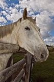 Grey horse blue sky. A grey horse with his head hanging over a wooden fence with a dramatic blue sky and white clouds in the background stock image