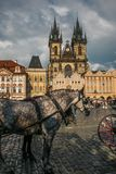 Grey horse with carriage for tourists in the Staromestske Namesti square of Prague. Portrait of grey horse with carriage for tourists in the Staromestske Namesti Royalty Free Stock Photos
