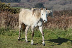 Grey horse in a field Royalty Free Stock Photo