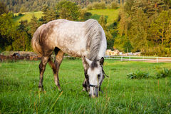 Grey horse on field Stock Photos