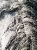 Grey horse (54) Stock Images