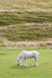 Grey horse grazing. At the bottom of a hill Stock Photos