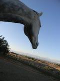Grey Horse Head Fotografie Stock