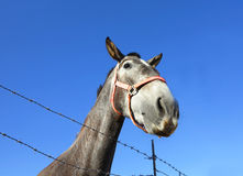Grey horse head Royalty Free Stock Images