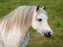 Grey Horse Head Shot Stock Photos