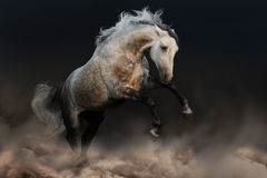Grey horse jump Royalty Free Stock Photos