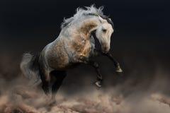 Grey horse jump Royalty Free Stock Photos