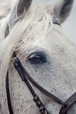 Grey horses eye Royalty Free Stock Images