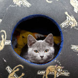 Grey kitten. Cute grey kitten looking out of his home Stock Images