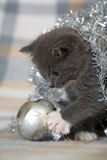 Grey kitten and decoration. Grey kitten playing with christmas decoration Royalty Free Stock Photo
