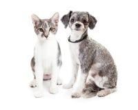 Grey Kitten linda y perrito que se sientan junto foto de archivo libre de regalías