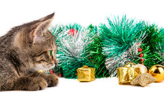 Grey kitten looking at Christmas decorations on white background Stock Photos