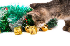 Grey kitten looking at Christmas decorations on white background Royalty Free Stock Photo