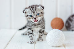 Grey kitten meow. On white wooden floor Royalty Free Stock Photos