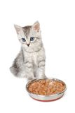Grey kitten near a bowl with food isolated on white Stock Photography