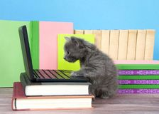 Grey kitten perched over miniature laptop computer royalty free stock photography
