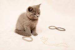 Grey kitten Stock Photos