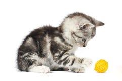 Grey kitten playing Royalty Free Stock Image