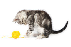 Grey kitten playing Stock Photo