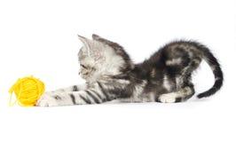 Grey kitten playing Stock Image