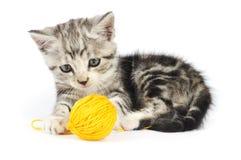 Grey kitten playing Royalty Free Stock Photo