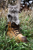 Grey Kitten Playing in einem Stiefel Lizenzfreies Stockbild