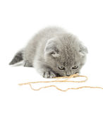 Grey kitten playing rope Royalty Free Stock Photos