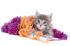 Grey kitten playing with wool. Looking grey kitten playing with wool, isolated on white royalty free stock photography