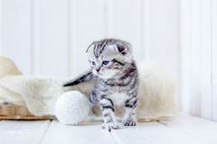 Grey kitten plays. Portrait of young and adorable kitten Stock Photo