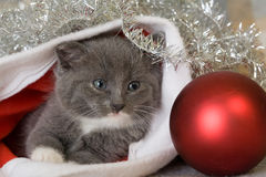 Grey kitten in a santa hat Royalty Free Stock Image