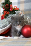 Grey kitten in a santa hat Royalty Free Stock Images
