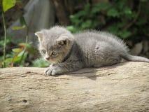 Grey kitten sitting on the tree. In the nature(garden,park stock photos