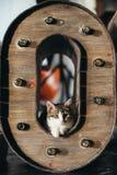Grey kitten  on white. Cute little ginger kitten is sleeping in soft blanket on wooden floor Stock Photography