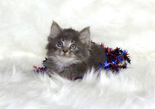 Kitten on white fur rug. Stock Photos