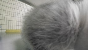 Grey kittens in cage stock footage